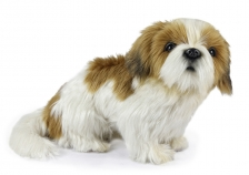 Собака Ши-тцу, 25 см