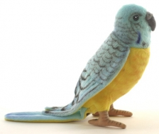Попугай волнистый голубой