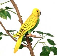 Попугай волнистый зеленый